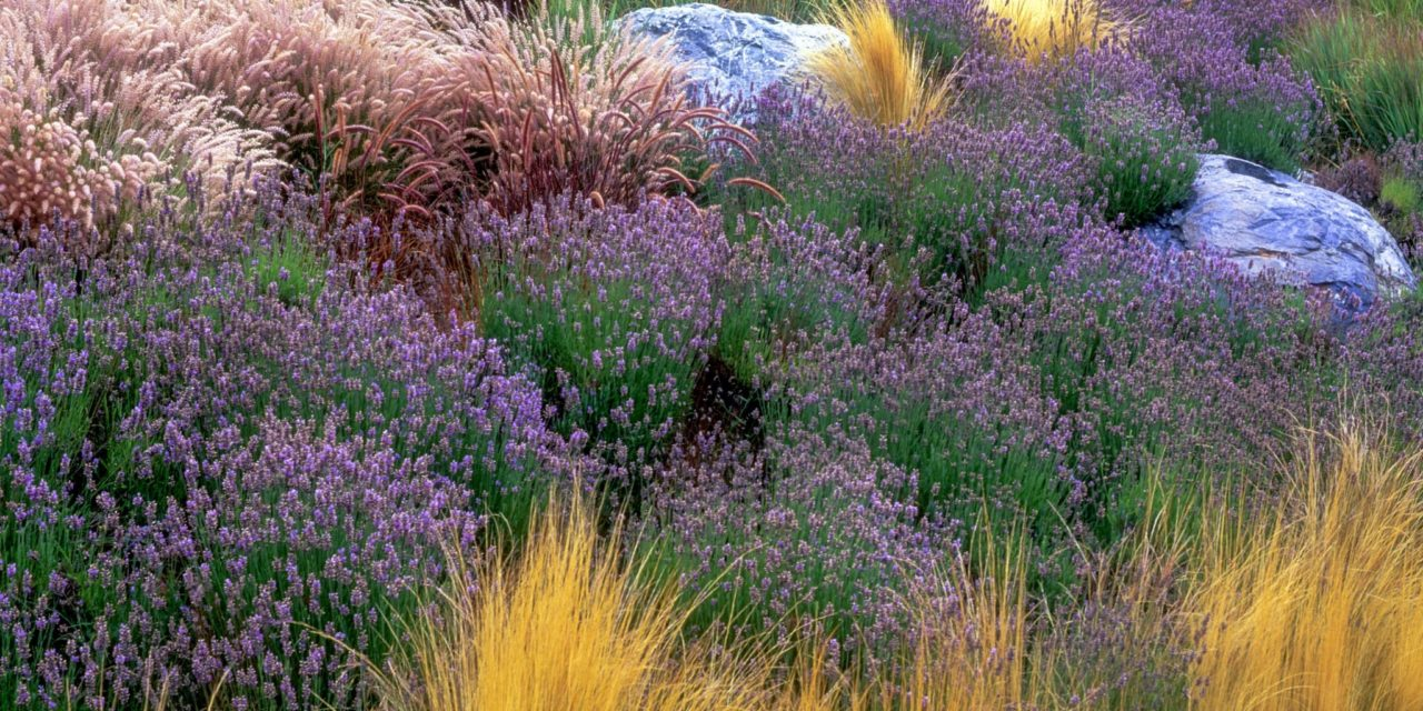 A Return to Nature: How Home Owners are Simplifying Landscaping