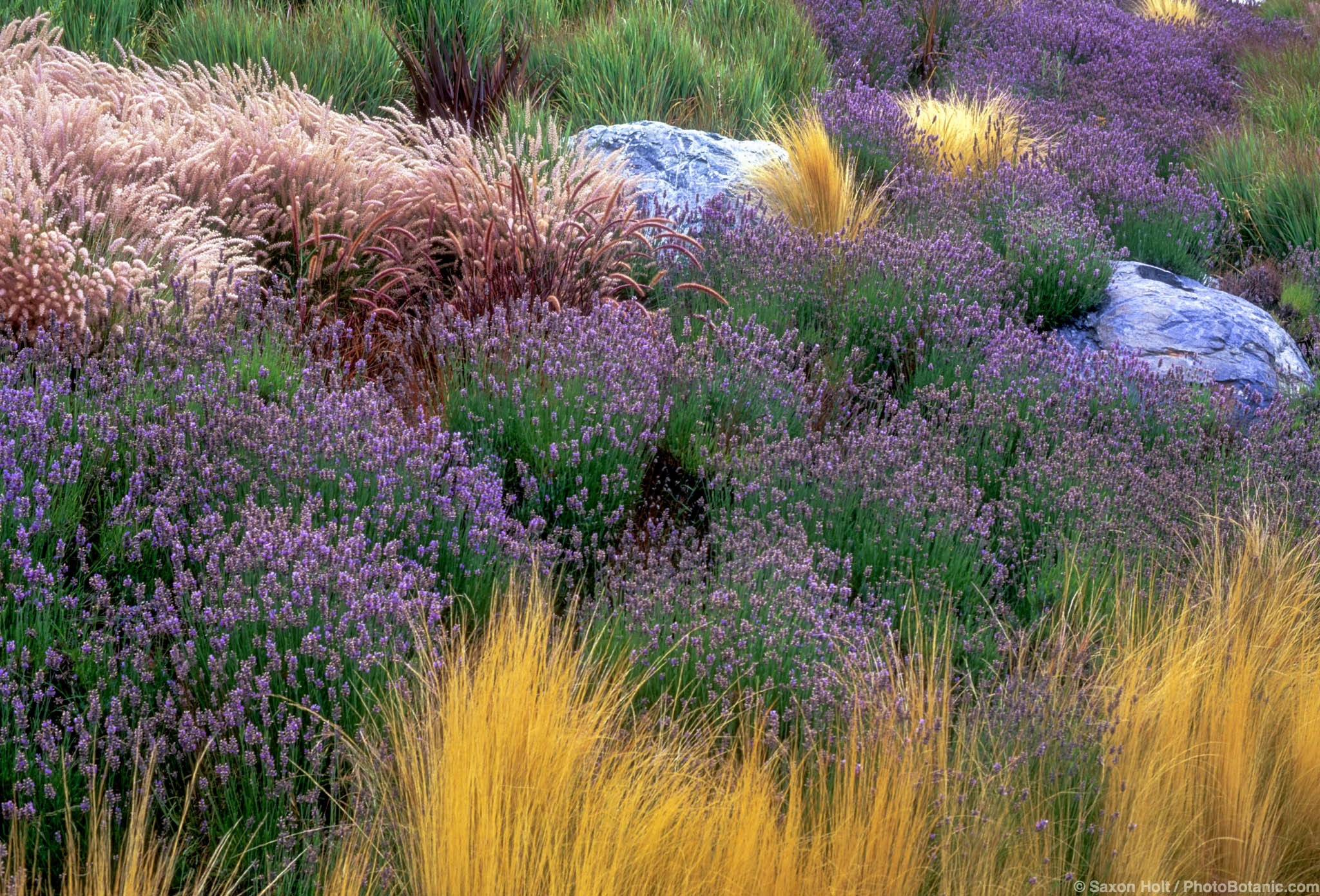 A return to nature how home owners are simplifying - Garden design using grasses ...