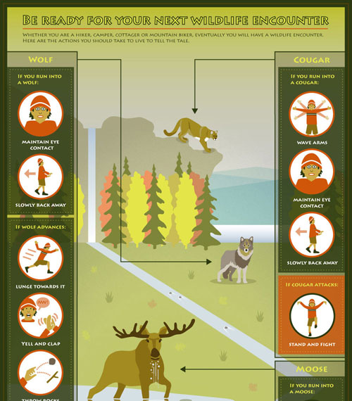 Camping Theme: What to do if you run into wildlife?