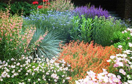 Landscaping for a Dry, Hot, and Windy Environment