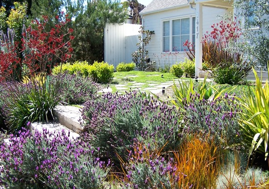 A great way to landscape in for drought.