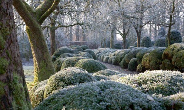Create an Enchanting Winter Garden Wonderland