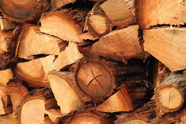 Uses of eucalyptus timber