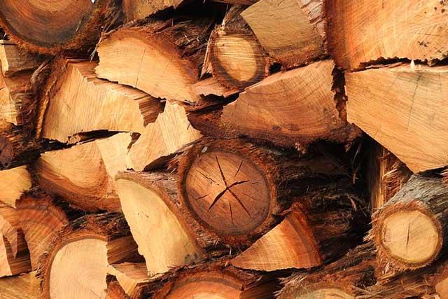 Uses of eucalyptus timber