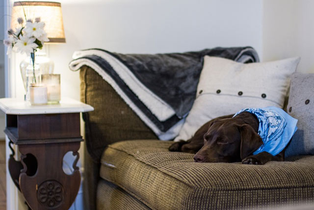 The Joy of Using a Bed Bug Sniffing Dog from NYC