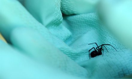 Why You Should Never Cancel Pest Control Services in the Winter