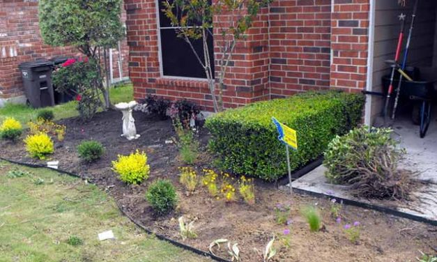 6 Tricks for Affordable Landscaping To Decor Outside of Your Home