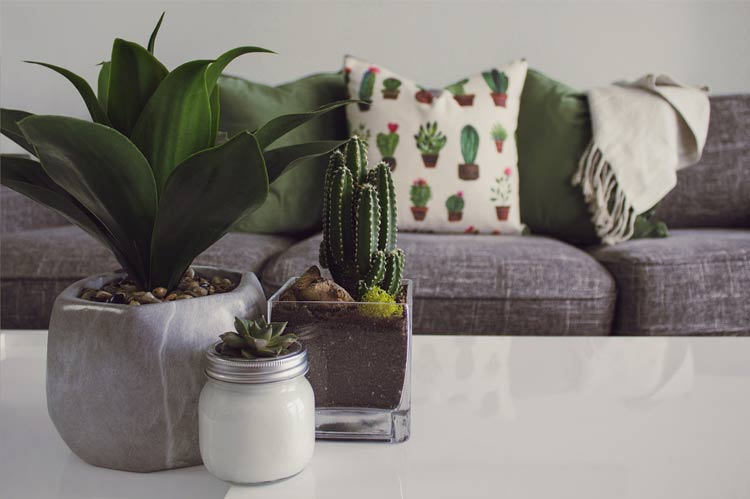 study room plants