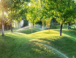 maintaining your backyard