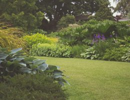 Garden Looking Great