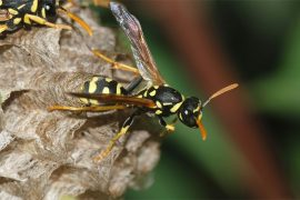 Wasp Nest on Your Property